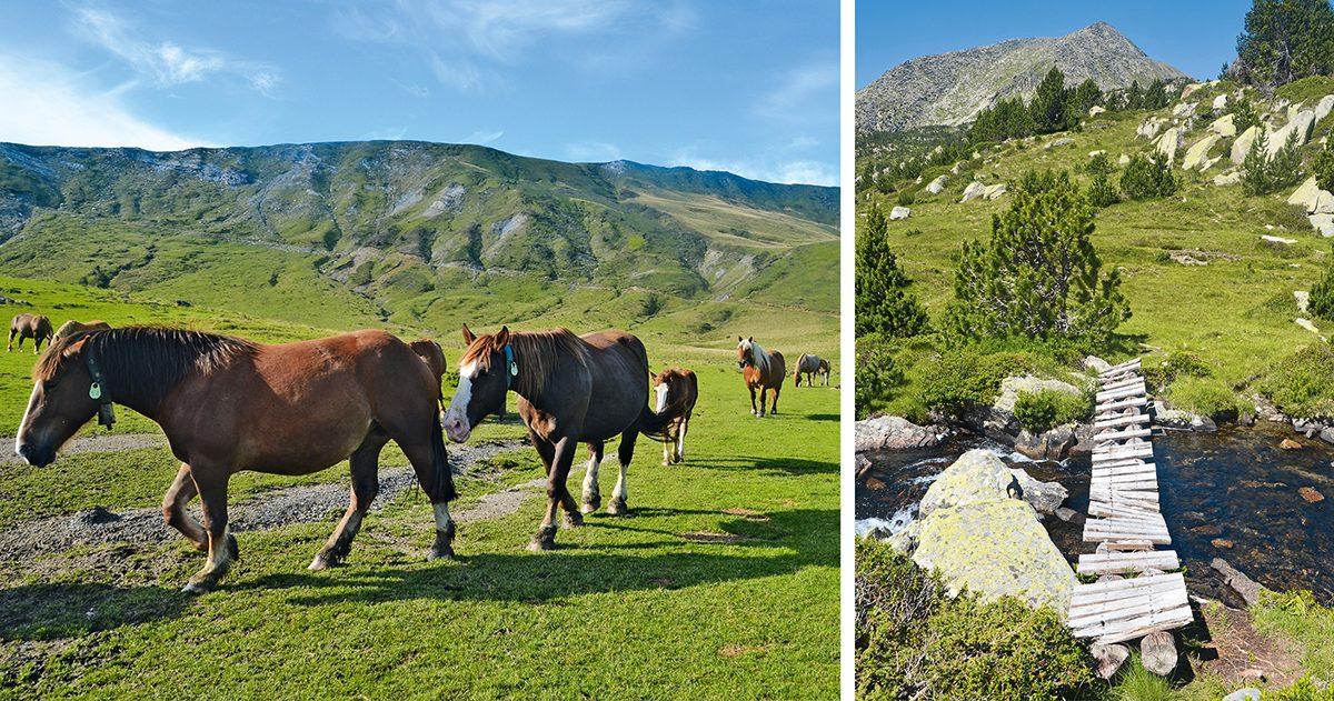 Frei weidende Pferde und eine abenteuerliche Bachüberquerung