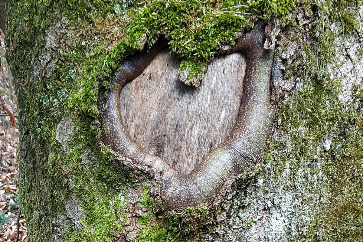 Naturzeit im Wald